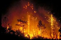 Pour stopper un incendie, un seau d'eau suffit la première minute, mais au bout de dix minutes, il faut une tonne d'eau. La vitesse de propagation peut aller de 20 à 50 mètres par minute selon le vent et le type de végétation. © Jean-Michel MOUREY - Cemag