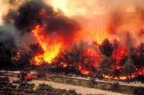 Le vent qui change, un retour de flammes, et on peut vite se retrouver encerclé par les flammes. En 2003, 10 personnes dont 4 pompiers ont laissé leur vie dans les incendies de forêt. © Laurent JOEL - Cemagref