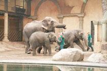 Morgens, beim Rausbringen der Elefanten