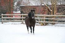 lauf, Pony