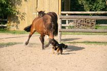 Pferd und Hund bei der Jagd