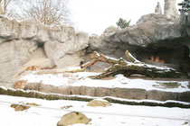Gruppenbild Löwen
