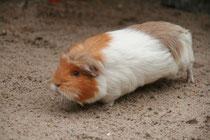 Schweinchenalarm!!!
