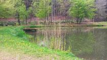 Landschaftsweiher Erfweiler