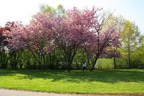 Frühling im Kurpark in Dahn