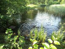 Teich im Kurpark in Dahn