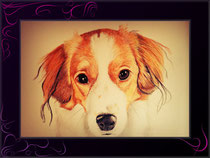 Hundeportrait in Farbe