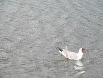 泳ぐ鳥も見れます