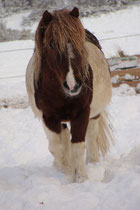 Ulano du Ster dans la neige