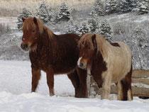 Vitality des Coeurs et Ambre de Liubov sous la neige