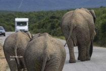 Elefanten auf der Straße