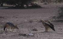 Streit zwischen Schkal und Adler