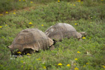 Schildkröten unterwegs