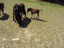 Mit ihrem zweiten Fohlen Zabou