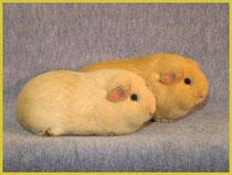Felix und Regula. Die Siamesischen imteam. An den Nierli zusammengewachsen. Sie machen es aber gut.