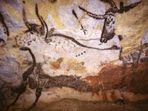 Représentation de taureau à Lascaux. (datation entre 18 000 et 17 000 ans)