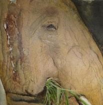 """tembo""  40 x 40 cm,  2014"