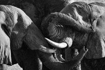 Elefants in Hwange National Park, Zimbabwe 2015