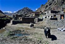 Tsurphu, Tibet 1993