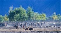 Farmers in Samye, Tibet 1993