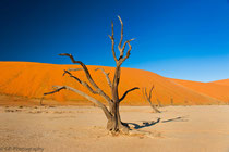 Dead Vlei, Namibia 2011