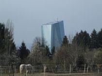 """Blick vom Waldrand auf die """"neue"""" EZB in Frankfurt-Ost"""