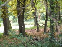 Parklandschaft Schloß derer von Ysenburg in Meerholz