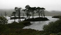Loch Assynt (Highlands). Ein Fotograf hatte uns empfohlen von hier aus nach Lochinver zu fahren. Wegen zunehmend schlechtem Wetter lassen wir dies jedoch sein.