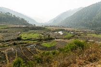 Reisfelder so weit das Auge reicht ...