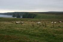Landschaft Nahe der Ortschaft John o´Groats. Von hier aus fahren Fähren zu den Orkney-Inseln.