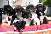 die 6 Babys mit acht Wochen