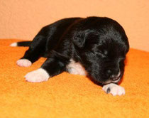 Faye mit 4 Tagen