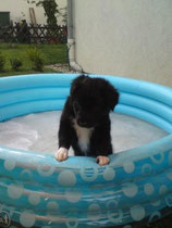 Faye die Wasserratte