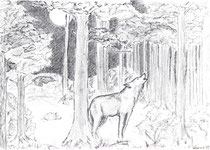 Ein Wolf in den Wäldern um Ornanung - vielleicht Wafaa?