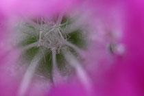 Blüteninneres
