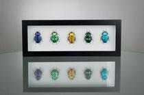 Beetles Rainbow II