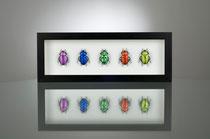 Beetles Rainbow