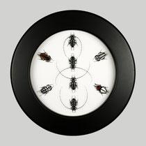 Beetles Circle