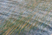 Wind Wasser Binsen