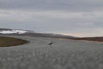 Båtsfjord (Norwegen)