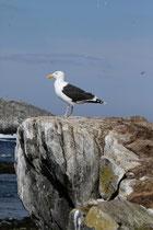 Hornøya (Norwegen)