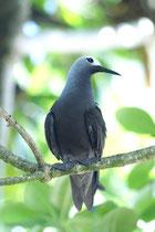 Cousin (Seychellen)