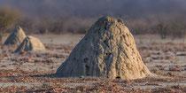 TermitenhügelHobatere