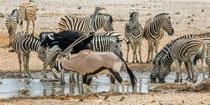 Oryx, Zebras und Strauss