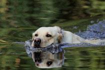 Wassergewöhnung