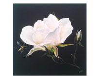Rose weiss: 40x40cm