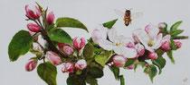 Apfelblütenzweig: 135x63cm