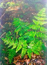 Farn auf Waldboden 2: 40x60cm