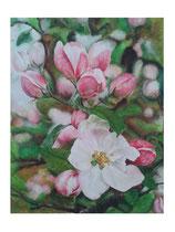 Apfelblüten: 80x100cm
