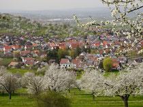 Bissingen/Teck
